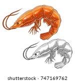 shrimp   Shutterstock .eps vector #747169762