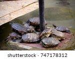 Tortoise Family Life