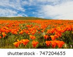 super bloom california poppy... | Shutterstock . vector #747204655