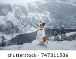 a dog in the winter in the... | Shutterstock . vector #747311536