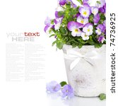 Viola Flowers In A Pot With...