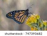 monarch butterfly | Shutterstock . vector #747393682