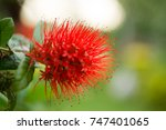 close  up  red  flowers | Shutterstock . vector #747401065