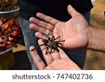 a man holds a large tarantula...   Shutterstock . vector #747402736