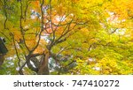 autumn and japan travel concept ... | Shutterstock . vector #747410272