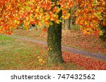 various colours of maple leaves ... | Shutterstock . vector #747432562