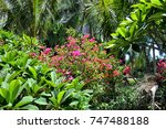 forest glade in the cool shade... | Shutterstock . vector #747488188