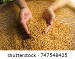 Rice In Hands