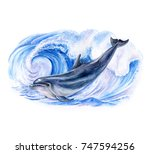 a dolphin realistic and  marine ...   Shutterstock . vector #747594256