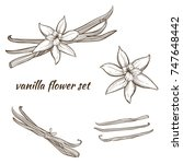 vanilla pods and flower | Shutterstock .eps vector #747648442
