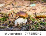 big brown mushroom hidden in... | Shutterstock . vector #747655342