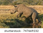 african white and black rhino | Shutterstock . vector #747669232