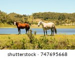 horse at the farm | Shutterstock . vector #747695668