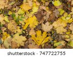 photo closeup of autumn... | Shutterstock . vector #747722755