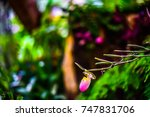 beautiful orchid flower in the... | Shutterstock . vector #747831706