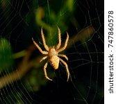 Dangerous Spider Web Background ...