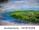 Green Algae On A Rock In The...