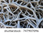 close up of antler arch in... | Shutterstock . vector #747907096