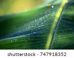 palm leaf with drops of water... | Shutterstock . vector #747918352