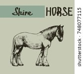Vector Shire Draft Horse