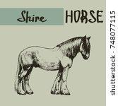 Vector Shire Draft Horse