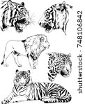 set of vector drawings on the... | Shutterstock .eps vector #748106842