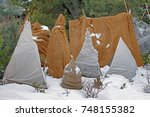 shrubs protection from frost in ... | Shutterstock . vector #748155382