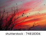 Birds On The Beautiful Sunset...