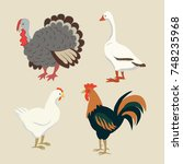 vector of poultry.set of... | Shutterstock .eps vector #748235968
