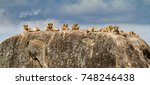 Pride Of Lions On A Rock In Th...