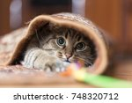 Stock photo playing the cat in the carpet 748320712