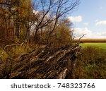 Autumn   Dead Trees On The Sid...