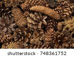 fir tree and pine tree cones... | Shutterstock . vector #748361752