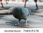 Pigeon On The Street. View From ...