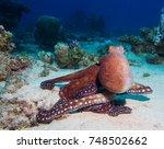 common octopus   octopus... | Shutterstock . vector #748502662