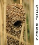 Small photo of Thick billed weaver nest.