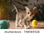 Stock photo  month year old thai kitten playing blue ball of yarn 748585528