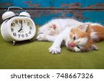 Stock photo portrait of kittens sleeping with white alarm clock on the sofa 748667326