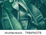 tropical banana leaf texture ... | Shutterstock . vector #748696378