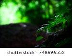 single waterdrop falling off... | Shutterstock . vector #748696552