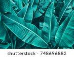 tropical banana leaf texture ... | Shutterstock . vector #748696882