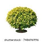 ficus altissima tree isolated... | Shutterstock . vector #748696996