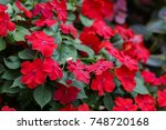 image of beautiful red... | Shutterstock . vector #748720168
