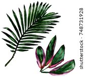 tropical hawaii leaves in a...   Shutterstock . vector #748731928