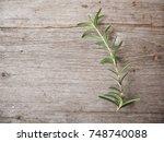 rosemary | Shutterstock . vector #748740088