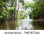 panorama from amazon rainforest ...   Shutterstock . vector #748787266