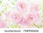 summer blossoming delicate... | Shutterstock . vector #748900606