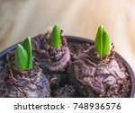 young plant in hands. planting... | Shutterstock . vector #748936576