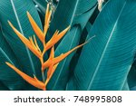 exotic flower  tropical foliage ... | Shutterstock . vector #748995808