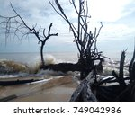 Small photo of wave hit dead tree at yad beach
